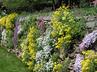 Rose Garden Rock Wall