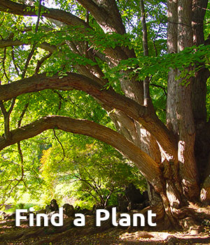 Find a Plant