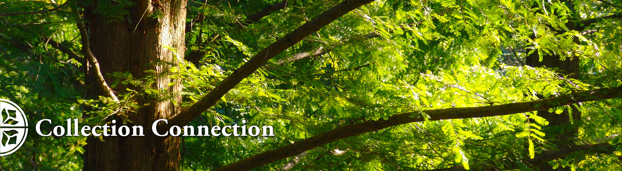 Collection Connection at Morris Arboretum